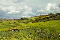 Peru, Moray, Urubamba Valley Farmland.