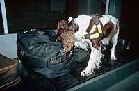 A HMP Customs and Excise drugs sniffer dog searching bags on a conveyor belt for illegally imported drugs...© SHOUT. THIS PICTURE MUST ONLY BE USED TO ILLUSTRATE THE EMERGENCY SERVICES IN A POSITIVE MANNER. CONTACT JOHN CALLAN. Exact date unknown.john@shoutpictures.com.www.shoutpictures.com...