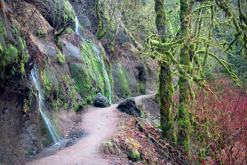 Trail with seasonal waterfalls in winter. Eagle Creek. Columbia River Gorge National Scenic Area, Oregon