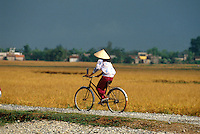 Reisfeld in der Ha Nam Binh-Provinz, Vietnam