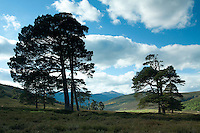 Glen Lui from near Derry Lodge, Aberdeenshire