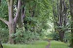 Europa, DEU, Deutschland, Nordrhein Westfalen, NRW, Rheinland, Niederrhein, Duisburg, Naturschutzgebiet Rheinaue Friemersheim, Baumallee, Hainbuchen, Kategorien und Themen, Natur, Umwelt, Landschaft, Jahreszeiten, Stimmungen, Landschaftsfotografie, Landschaften, Landschaftsphoto, Landschaftsphotographie, Naturschutz, Naturschutzgebiete, Landschaftsschutz, Biotop, Biotope, Landschaftsschutzgebiete, Landschaftsschutzgebiet, Oekologie, Oekologisch, Typisch, Landschaftstypisch, Landschaftspflege......[Fuer die Nutzung gelten die jeweils gueltigen Allgemeinen Liefer-und Geschaeftsbedingungen. Nutzung nur gegen Verwendungsmeldung und Nachweis. Download der AGB unter http://www.image-box.com oder werden auf Anfrage zugesendet. Freigabe ist vorher erforderlich. Jede Nutzung des Fotos ist honorarpflichtig gemaess derzeit gueltiger MFM Liste - Kontakt, Uwe Schmid-Fotografie, Duisburg, Tel. (+49).2065.677997, ..archiv@image-box.com, www.image-box.com]