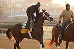 Uncle Mo, trained by Todd Pletcher and to be ridden by John Velazquez , exercises in preparation for the 2011 Breeders' Cup at Churchill Downs on October 29, 2011.