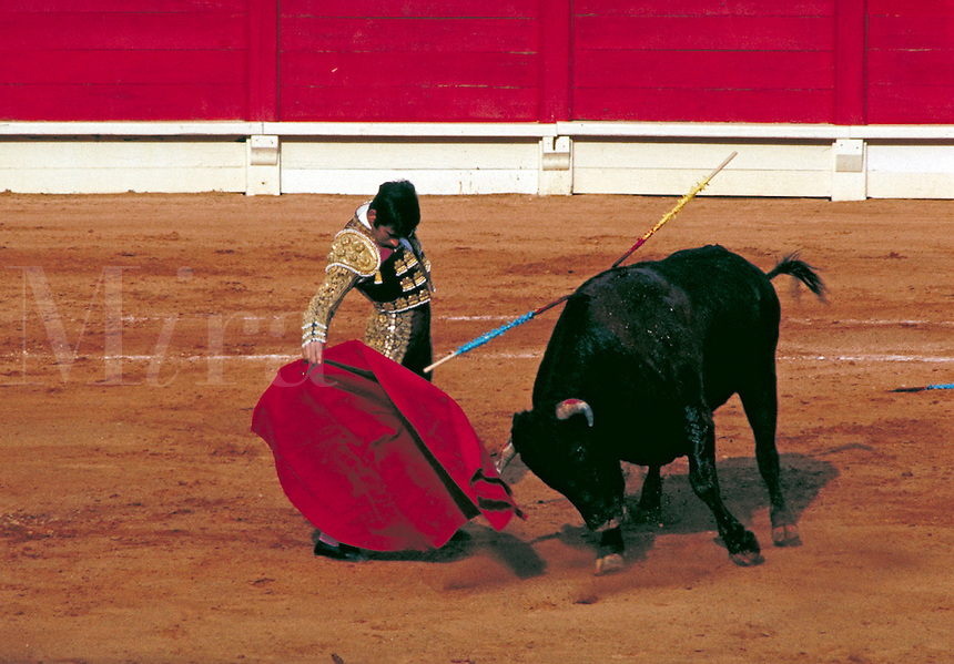 A brave bullfighter gracefully holds his red cape to a fierce charging bull during a bullfight. Mexico D.F., Mexico.