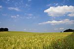 Europa, DEU, Deutschland, Nordrhein Westfalen, NRW, Rheinland, Niederrhein, Toenisberg, Wolfsberg, Agrarlandschaft, Feld, Acker, Getreide, Gerste, Anbau, Himmel, Wolken, Cumuluswolken, Kategorien und Themen, Landwirtschaft, Landwirtschaftlich, Agrar, Agrarwirtschaft, Erzeugung, Landwirtschaftliche Produkte, Natur, Naturfoto, Naturfotos, Naturfotografie, Naturphoto, Naturphotographie, Landschaft, Landschaften, Landschaftsfoto, Landschaftsfotografie, Landschaftsphoto, Landschaftsphotographie......[Fuer die Nutzung gelten die jeweils gueltigen Allgemeinen Liefer-und Geschaeftsbedingungen. Nutzung nur gegen Verwendungsmeldung und Nachweis. Download der AGB unter http://www.image-box.com oder werden auf Anfrage zugesendet. Freigabe ist vorher erforderlich. Jede Nutzung des Fotos ist honorarpflichtig gemaess derzeit gueltiger MFM Liste - Kontakt, Uwe Schmid-Fotografie, Duisburg, Tel. (+49).2065.677997, ..archiv@image-box.com, www.image-box.com]