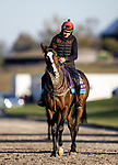 November 3, 2020: Cadillac, trained by trainer Mrs. John Harrington, exercises in preparation for the Breeders' Cup Juvenile Turf at  Keeneland Racetrack in Lexington, Kentucky on November 3, 2020. Alex Evers/Eclipse Sportswire/Breeders Cup