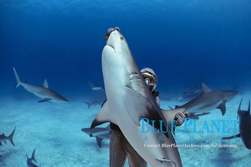 Caribbean Reef Shark (Carcharhinus perezii) in hypnotic trance being lifted by shark handler, Bahamas - Caribbean Sea.