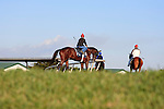 Horses being exercised at Palm Meadows, Boynton Beach Florida.