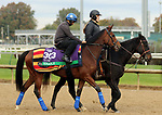 October 30, 2018 : Enable at Churchill Downs on October 30, 2018  in Louisville, Kentucky in preparation for the Breeders' Cup Turf. Mary M. Meek/ESW/CSM
