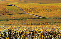 Champagne vines near Hautvillers in Autumn. Marne, France.  Principal Champagne producing area.