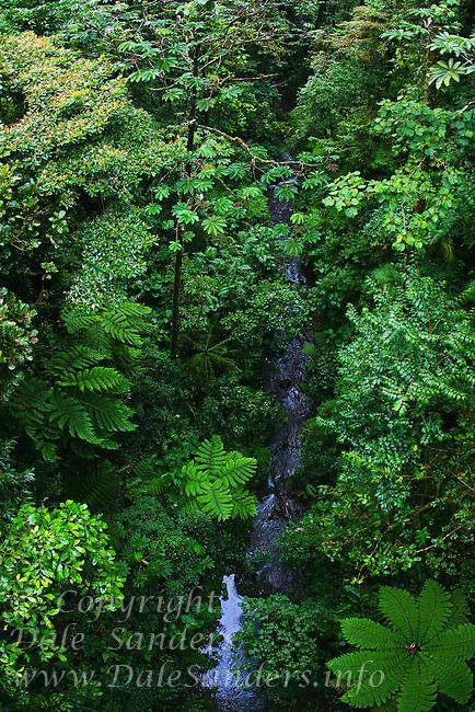 Stream in the Monteverde Cloud Forest Biological Reserve, Costa Rica.
