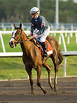 30 January 2010: Jessica Is Back and jockey Julien Leparoux after the Sunshine Millions Distaff Stakes at Gulfstream Park in Hallandale Beach, FL.