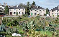 Gardening allotments,Kendal, Cumbria.