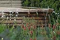 Homebase Teenage Cancer Trust Garden, designed by Joe Swift, RHS Chelsea Flower Show 2012. Plants include Libertia grandiflora, coppery Verbascum petra and bronze fennel (Foeniculum vulgare 'Purpureum').