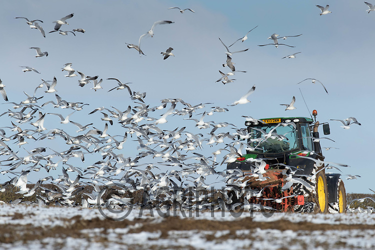 11-2-2021 Ploughing in the snow and frost in Rutland<br /> ©Tim Scrivener Photographer 07850 303986<br />      ....Covering Agriculture In The UK....