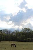 Horse grazing under a big sky.