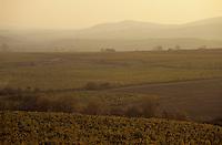 Europe/Hongrie/Tokay/Env Sarospatak: Les vignes du château Megyer le matin