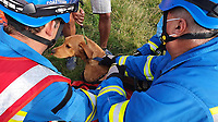 BNPS.co.uk (01202) 558833. <br /> Pic: KimmeridgeCoastguard/BNPS<br /> <br /> Pictured: Coastguard rescue teams from Lulworth and Kimmeridge with Milo after the rescue. <br /> <br /> A dog had a lucky escape after it fell 65ft off a cliff at a hugely popular beauty spot.<br /> <br /> Milo the golden labrador was walking with his family at the top of the 200ft cliff at Durdle Door in Dorset on Monday afternoon when he suddenly disappeared over the edge.<br /> <br /> Thankfully the spot where he fell was a steep slope rather than a sheer drop and he managed to stop 65ft down the cliff.