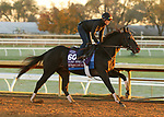 Extravagant Kid, trained by trainer Brendan P. Walsh, exercises in preparation for the Breeders' Cup Turf Sprint at Keeneland Racetrack in Lexington, Kentucky on October 31, 2020.
