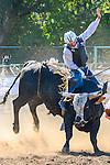 Benton County Rodeo 2013 Pictures