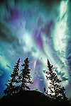 Boreal forest & aurora borealis, Canada