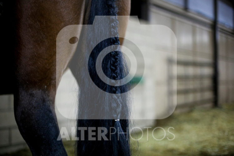 SAN BARTOLOME DE PINARES, SPAIN - JANUARY 16: Horses are prepared for the celebration on January 16, 2013 in San Bartolome de Pinares, Spain. In honor of San Anton, the patron saint of animals, horses are riden through the bonfires on the night before the official day of honoring animals in Spain. Victor J. Blanco / Alterphotos