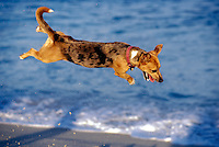 Mexico, Baja California, San Jose del Cabo, airborne dog. PR available.<br />