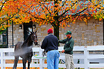 31 October 2009: A hotwalker and track worker hose off a race horse under the colorful maple leaves near the barn area at Keeneland. The final day of Keeneland's fall meet was cloudy and cold with a damp feeling throughout the day made crowds smaller then normal.