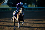 November 3, 2020: Raging Bull, trained by trainer Chad C. Brown, exercises in preparation for the Breeders' Cup Mile at Keeneland Racetrack in Lexington, Kentucky on November 3, 2020. Jon Durr/Eclipse Sportswire/Breeders Cup