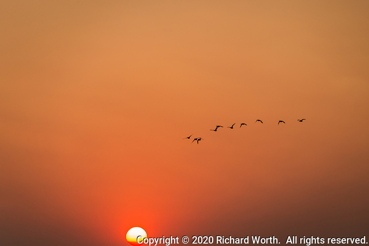 Sunset, glowing orange from smoke generated by wildfires, while seabirds fly west, toward the setting sun.