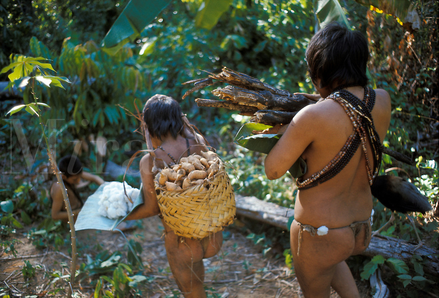 Slash-and-burn agriculture by Indians of Guiana Highlands of Venezuela: woman and daughter returning from garden with harvest of firewood, sweet potatoes, cotton