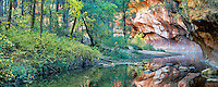 West Fork Oak Creek with reflection. Red Rock Secret Mountain Wilderness, Arizona