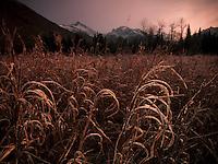 Frost coats grasses along the Eagle River, Alaska.