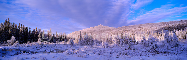 Winter Setting of Frosted Trees in Boreal Forest and Marsh, in Liard River Hot Springs Provincial Park, Northern British Columbia, Canada - Panoramic View