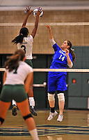 28 October 2012: Yeshiva University Maccabee Samantha Selesny, a Senior from W. Hempstead, NY, in action against the Old Westbury Panthers at SUNY Old Westbury in Old Westbury, NY. The Panthers defeated the Maccabees 3-0 in NCAA women's volleyball play. Mandatory Credit: Ed Wolfstein Photo