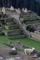 Machu Picchu, Peru - Eastern Urban Sector at top, Grand Staircase leading to Artisans' Wall at Bottom.