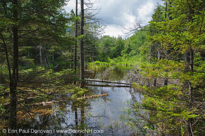 Wetlands area deep in the Pemigewasset Wilderness of the New Hampshire White Mountains. Railroad track from a spur line of the East Branch & Lincoln Railroad is submerged in this swamp. The East Branch & Lincoln was a logging railroad in operation from 1893-1948, and this spur line is located off the North Fork Branch of the railroad.