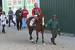 September 19, 2014: California Chrome, ridden by Willie Delgado and led by Raul Rodriguez, heads to the Parx track for gate training and a gallop in preparation for Saturday's Pennsylvania Derby at Parx racing in Bensalem, PA  ©Joan Fairman Kanes/ESW/CSM