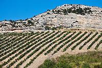 Europe/France/Corse/2B/Haute-Corse/Cap Corse/Patrimonio: Le Vignoble