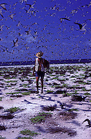 Biologist David Woodside walking through sooty tern colony on Jarvis Island