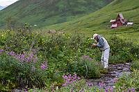 Photographer in heath tundra near Hatcher Pass, Alaska,  Independence Mine State Historical Park