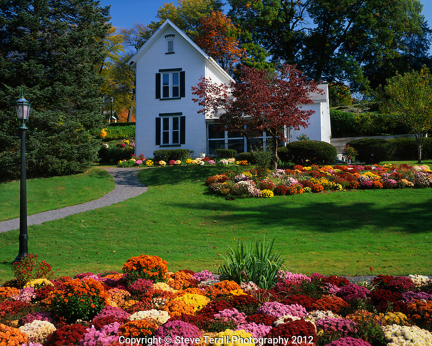 USA, New York, Chrysanthemums on display at Seamon Park in Ulster County