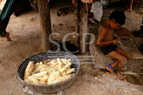 Roraima State, Brazil. Macuxi Indian boy sitting next to bowl of peeled manioc root ready for grating.