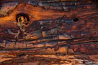 Fallen Log Detail, Plaskett Ridge, Los Padres National Forest, Big Sur, California, US
