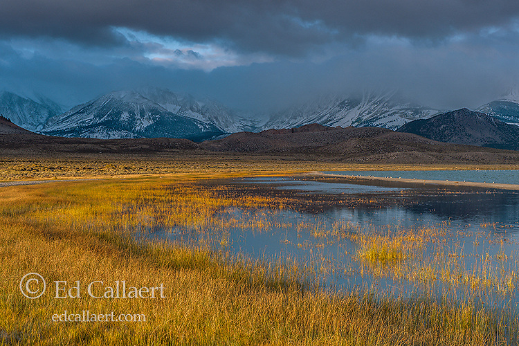 Approaching Storm, Wetlands, Mount Gibbs, Mount Dana, Mono Basin National Forest Scenic Area, Eastern Sierra, Inyo National Forest, California
