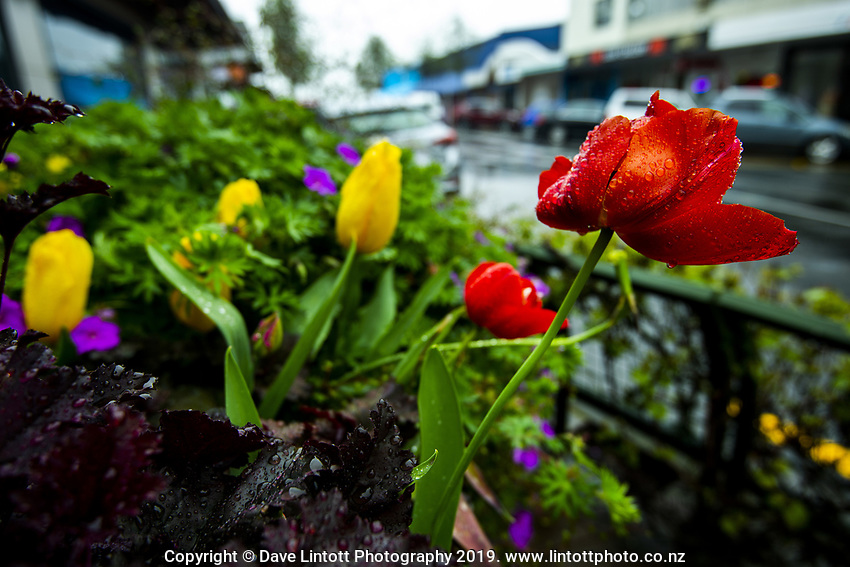 Masterton, New Zealand on Wednesday, 16 October 2019. Photo: Dave Lintott / lintottphoto.co.nz