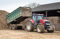 1-3-2021 Contractors carting and tipping beet on a heap towards the end of the season in Lincolnshire.<br />  ©Tim Scrivener Photographer 07850 303986<br />      ....Covering Agriculture In The UK....