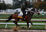 October 28, 2015:  Calamity Kate, trained by Kelly Breen, and owned by George & Lori Hall, is entered in the Breeder's Cup Longines Distaff Grade 1 $2,000,000.  Candice Chavez/ESW/CSM
