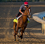 LOUISVILLE, KY - APRIL 28: Promises Fulfilled, trained by Dale Romans, exercises in preparation for the Kentucky Derby at Churchill Downs on April 28, 2018 in Louisville, Kentucky. (Photo by Scott Serio/Eclipse Sportswire/Getty Images)
