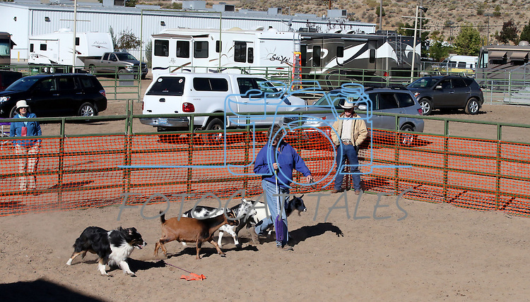Ray Blodgett of Fallon, rear, watches as his dog Spur works with Judge Sandy Moore during the specialty events at the Bonanza Kennel Club of Carson City's 24th Annual Dog Shows and Trials at Fuji Park in Carson City, Nev., on Friday, Sept. 27, 2013. <br /> Photo by Cathleen Allison/Nevada Photo Source